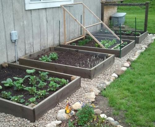 Home raised vegetable garden - Gallery Eco Wood Treatment