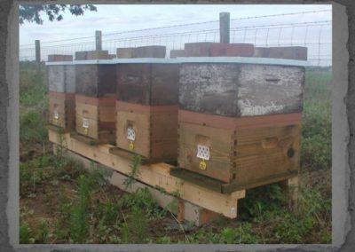 frugal-beekeeper-23-638